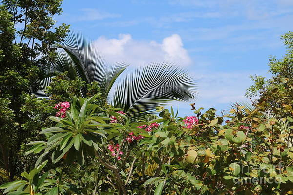 Wall Art - Photograph - Tropical Flair by Carol Groenen