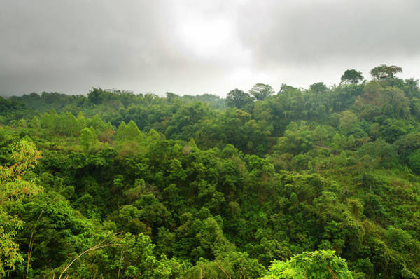 Flores Photograph - Tropical Forest Segment by Funky-data