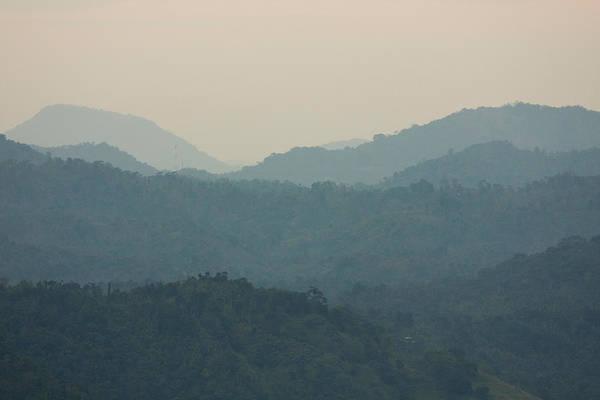 Wall Art - Photograph - Tropical Forest, Sri Lanka by David Hosking