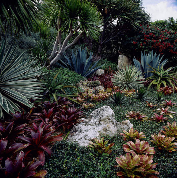 Palm Beach Photograph - Tropical Garden, West Palm Beach, Fl by Richard Felber