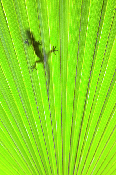 Wall Art - Photograph - Tropical Gecko by Alex Bramwell