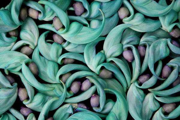 Wall Art - Photograph - Tropical Jade Vine Fallen Flower Pattern by Darrell Gulin