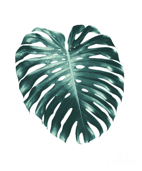 Single Leaf Mixed Media - Tropical Monstera Leaf #1 #tropical #decor #art by Anita Bella Jantz