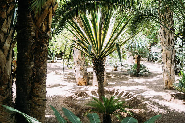 Wall Art - Photograph - Tropical Palm Garden by Pati Photography