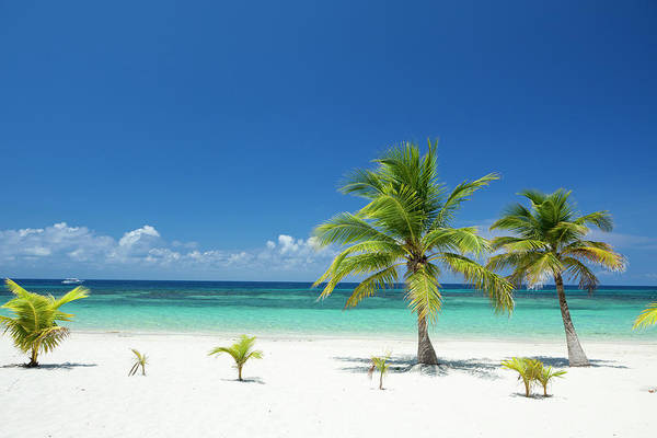 Roatan Photograph - Tropical Palm Trees On Beach by Dstephens