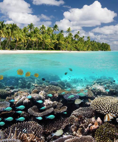 The Maldives Photograph - Tropical Paradise - The Maldives by Steve Allen