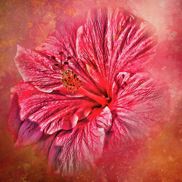 Wall Art - Photograph - Tropical Pink Hibiscus by HH Photography of Florida