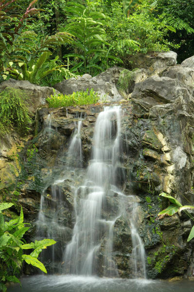 Botanical Photograph - Tropical Rainforest And Waterfall by Travelpix Ltd