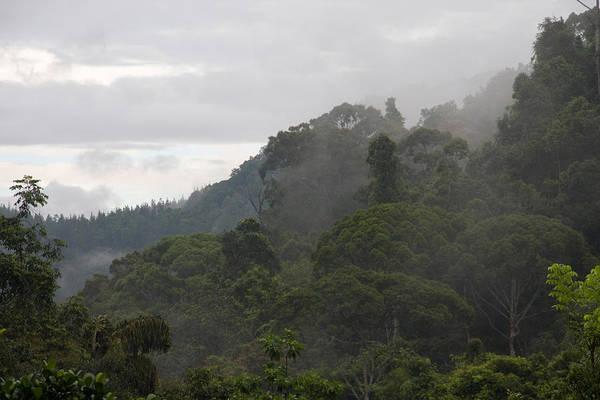 Wall Art - Photograph - Tropical Rainforest, Sri Lanka by David Hosking