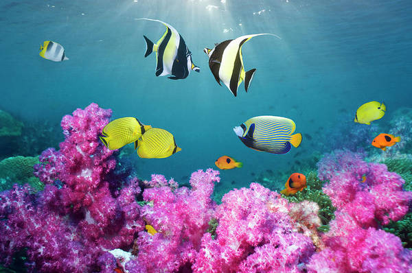 Wall Art - Photograph - Tropical Reef Fish Over Soft Corals by Georgette Douwma