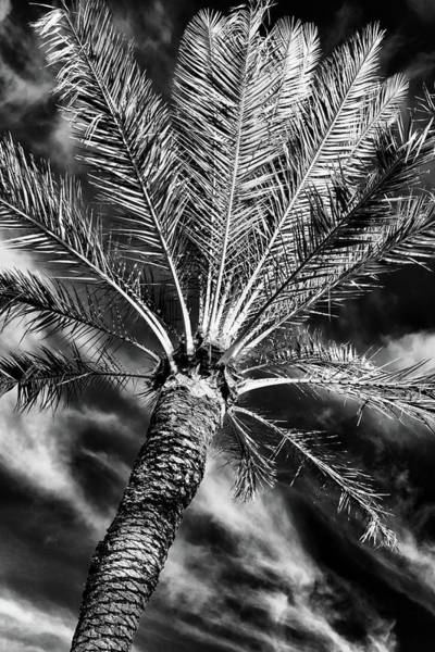Wall Art - Photograph - Tropical State Of Mind #2 by Stephen Stookey