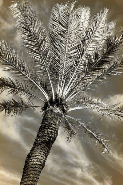 Wall Art - Photograph - Tropical State Of Mind #4 by Stephen Stookey