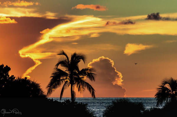 Photograph - Tropical Summer Nights by Susan Molnar