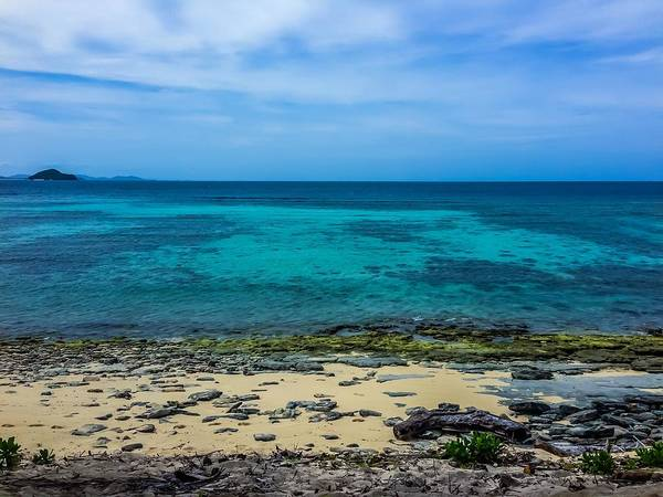 Photograph - Tropical Treasure by Jeremy Guerin