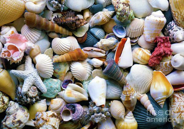Photograph - Tropical Treasure Seashells A91218 by Mas Art Studio