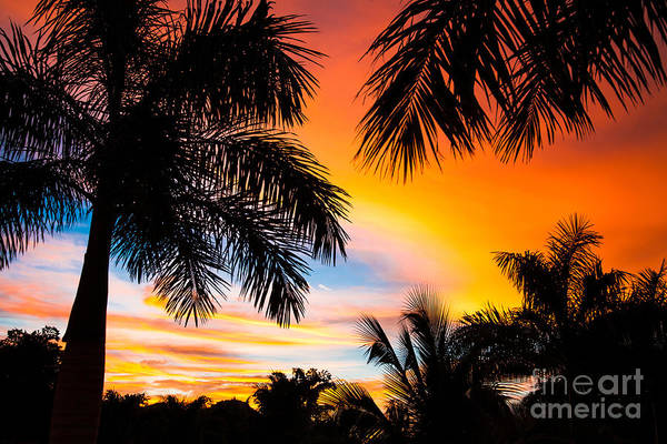 Wall Art - Photograph - Tropical Trees By The Beach In Central by Mervas