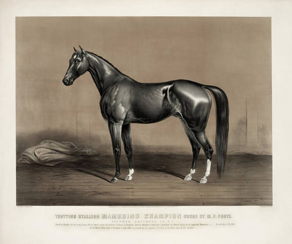 Mammal Mixed Media - Trotting Champion Stallion - Mambrino - Vintage Horse Racing Print by War Is Hell Store