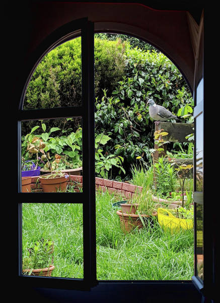 Photograph - Trough The Window by Tatiana Travelways
