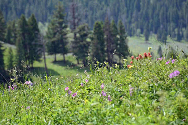 Photograph - Trout Lake Wildflowers by Bruce Gourley