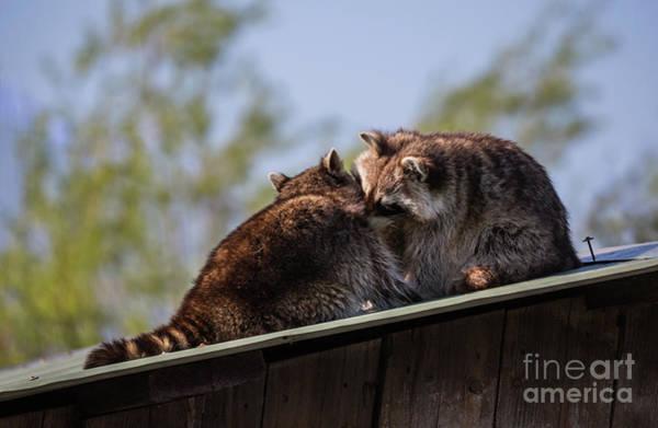 Photograph - True Love by Eva Lechner
