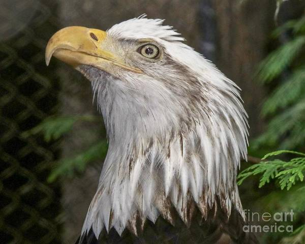 Photograph - True Patriot by Susan Rydberg