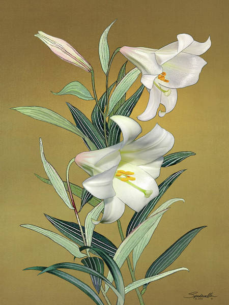 Wall Art - Digital Art - Trumpet Lily by M Spadecaller