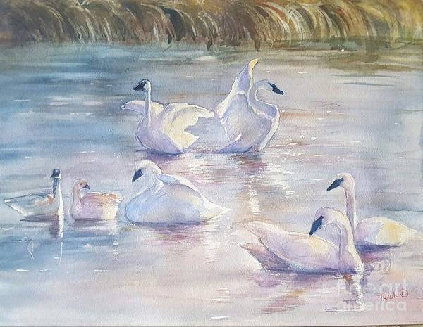 Trumpeter Swan Painting - Trumpeter Swans by Patricia Pushaw