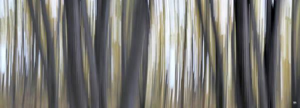 Photograph - Trunks 2 by John Meader