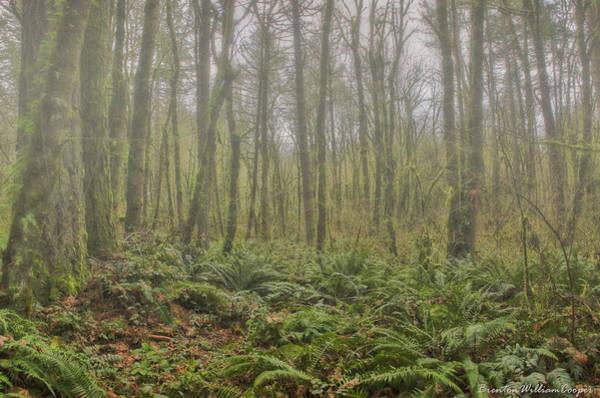 Camera Raw Photograph - Tualatin Woods Ground Fog by Brenton Cooper