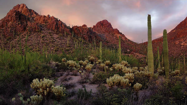 Wall Art - Photograph - Tucson Mountains Sunset by Dave Dilli