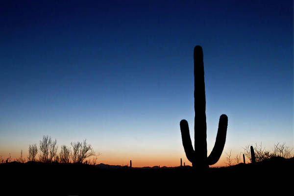 Photograph - Tucson Sunset by Robert Woodward