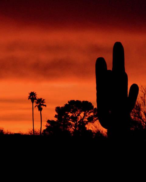 Photograph - Tucson's Natural Skyline by Chance Kafka