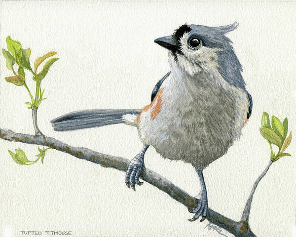 Titmouse Painting - Tufted Titmouse Original Watercolor Painting by Linda Apple