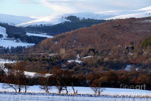 Photograph - Tulchan In Winter by Phil Banks