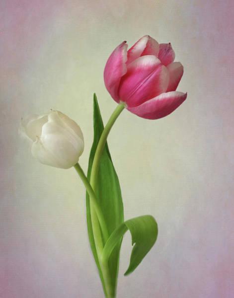 Wall Art - Photograph - Tulip Curves by David and Carol Kelly