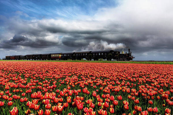Holland Wall Art - Photograph - Tulip Express by Jorge Maia