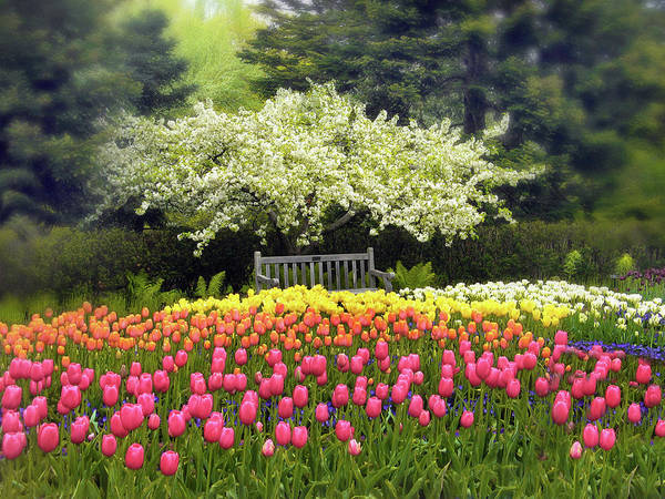 Photograph - Tulip Garden by Jessica Jenney