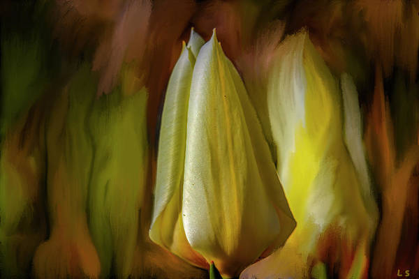 Photograph - Tulip #i7 by Leif Sohlman