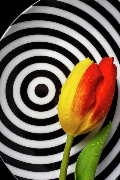 Wall Art - Photograph - Tulip On Graphic Circle Plate by Garry Gay