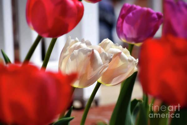 Photograph - Tulip Twins by Patti Whitten