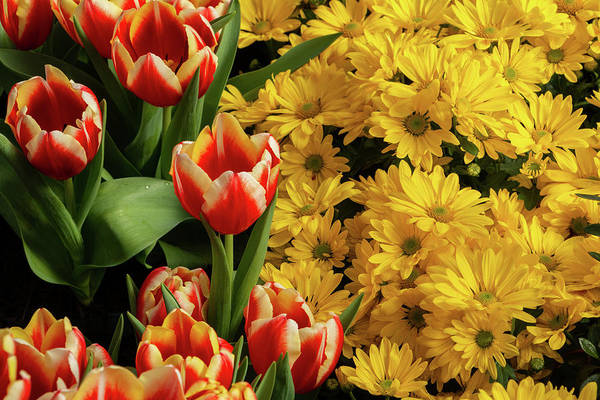 Photograph - Tulips And Daisies by Jeff Severson