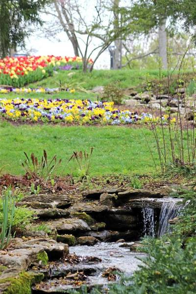 Wall Art - Photograph - Tulips And Streams by Gayle Miller
