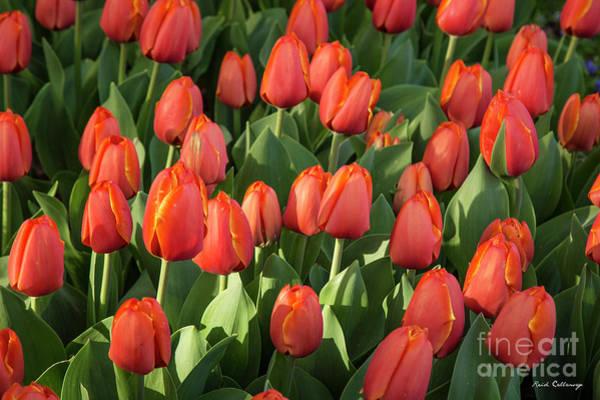 Photograph - Tulips At Sunrise Flower Garden Art by Reid Callaway