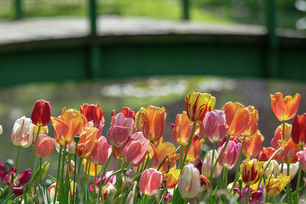 Wall Art - Photograph - Tulips By The Bridge by Mary Ann Artz