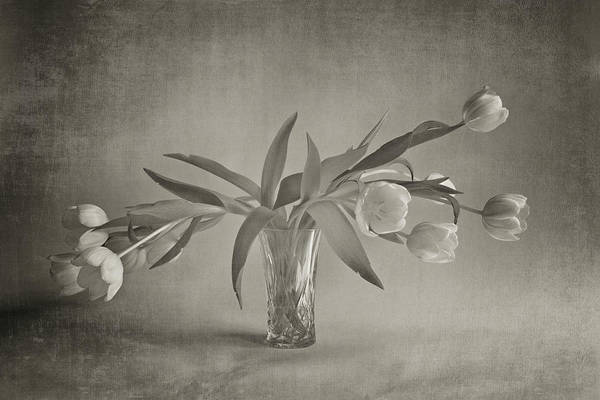 Nottinghamshire Photograph - Tulips In A Vase by Doug Chinnery