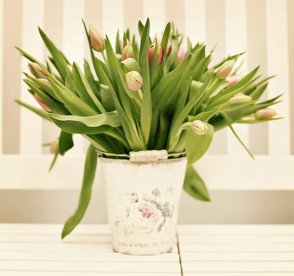 Wall Art - Photograph - Tulips In Bucket by Andrea Kamal