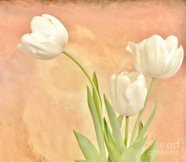 Wall Art - Photograph - Tulips White by Marsha Heiken