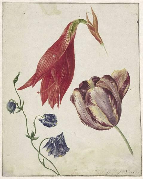 Wall Art - Painting - Tulp, Akelei En Amaryllis, Georgius Jacobus Johannes Van Os, 1792 - 1861 by Georgius Jacobus Johannes van Os