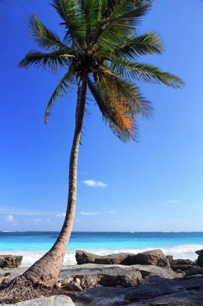 Quintana Roo Photograph - Tulum Mexico Single Tree On Beach by Maria Swärd