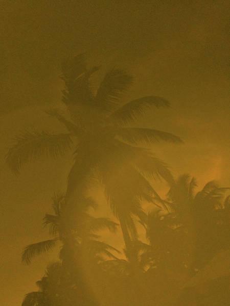 Photograph - Tulum Palm #2, 20 by Chris Hunt